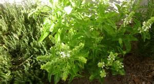 in home herb garden herb garden home herb gardens
