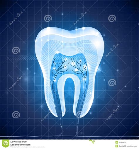 abstract section abstract tooth cross section stock images image 36582824