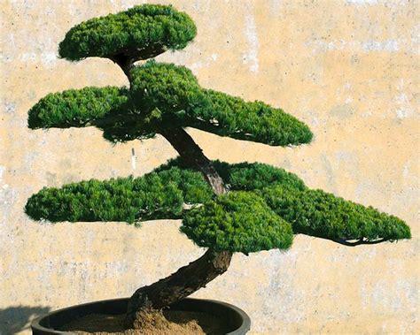 garten bonsai selber machen bonsai 1 gartenbonsai immer gut in form