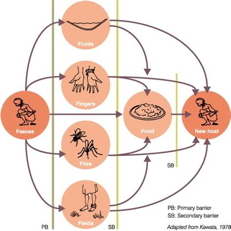 Spreads The Disease by Transmission Of Disease Representing Transmission