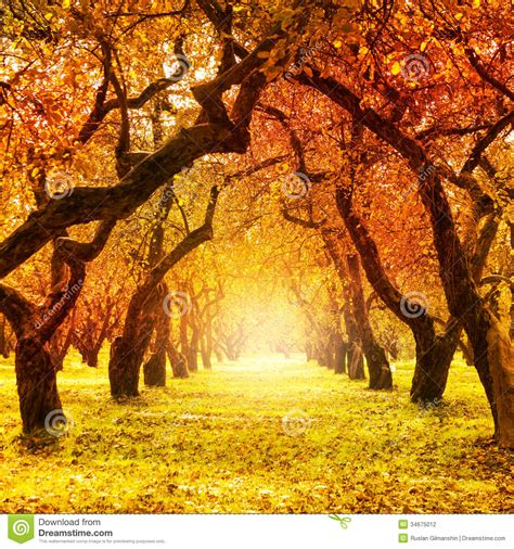 fall trees trees and fall on autumn fall autumnal park stock photography image