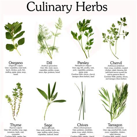 the magic of herbs lass vogue