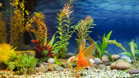 Plants For Living Room toxins related to red tides found in home aquarium