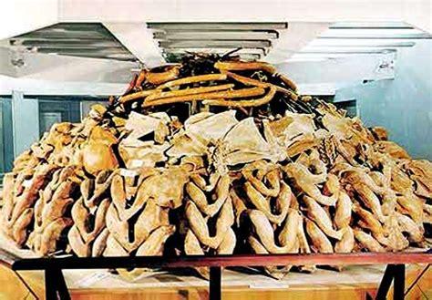 hutte en os de mammouth la vie des hommes de la pr 233 histoire