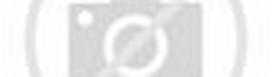 Kumpulan gambar-gambar Animasi binatang / hewan lucu :