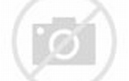 Pictures of Cute Bunnies Rabbits