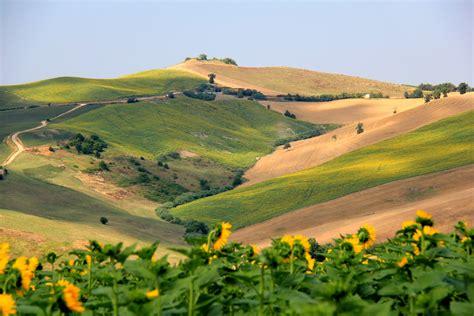 italia fiori sfondi italia paesaggio colline girasoli fiori