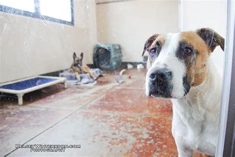 sf spca sf spca animal shelter 1 by kikkums on deviantart