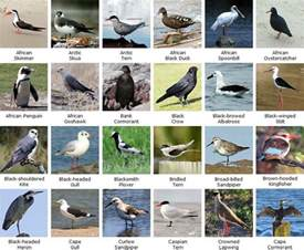 Essay On Different Types Of Birds In by Birding Is With Bird Names Birdwatching Species Names To Discoverer