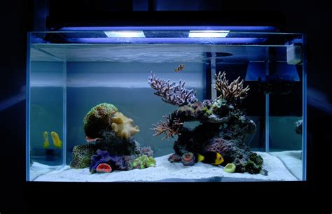 Marine Aquascaping Techniques by Tips And Tricks On Creating Amazing Aquascapes