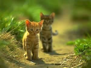 cute-<strong>kitten</strong>+1+%25283%2529.jpg