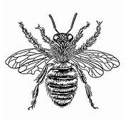 Bee  Queen PSFpng Wikimedia Commons