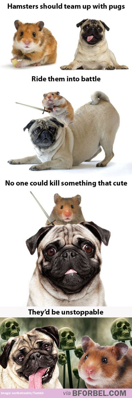 pug slogans 449 best images about pug words sayings on pug meme pug and pets