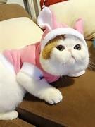 ... di internet. Foto-Foto kucing imut yang sangat menggemaskan