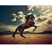 White Horse Swimming In The Blue Sea Desktop Wallpaper