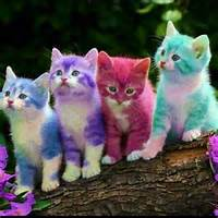 Rainbow Kittens  COLORS EVERYWHERE Pinterest And Rainbows