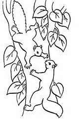 ... coloriage ecureuil coloriage ecureuils coloriages coloriages ecureuil