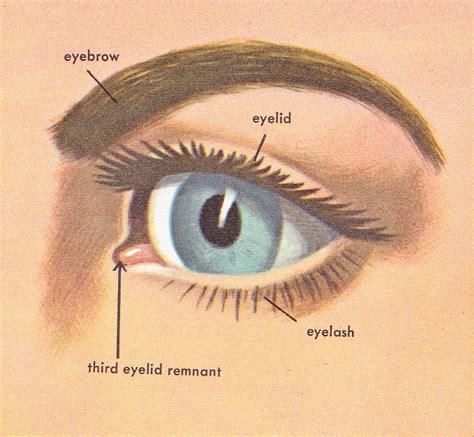 outer eye diagram pop circus february 2011
