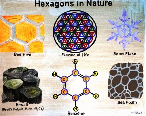 hexagon pattern in nature hexagons in nature google search honey comb patterns