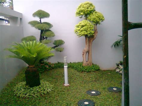 tukang taman terpercaya di jakarta jual tanaman hias murah