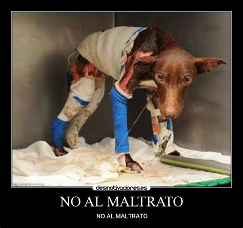 imagenes fuertes maltrato animal desmotiva el maltrato animal advertencia son imagenes un