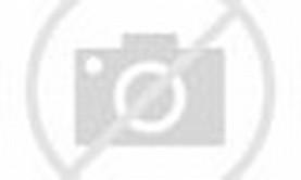 Cute Baby Siberian Tiger