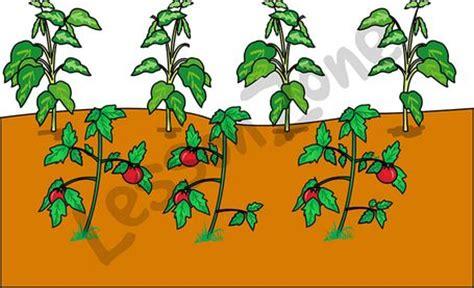 vegetable garden clip vegetable garden illustration clipart panda free