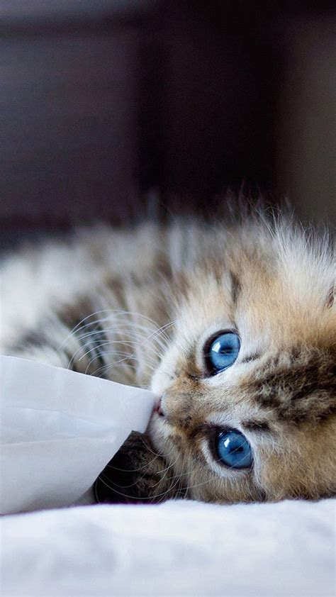cute cats hd wallpapers  iphone  wallpaperspictures