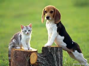 Dogs images beagle wallpaper hd wallpaper and background photos
