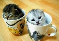 Cute Kittens in Cups