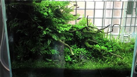Aquascape Ada by Ada Gallery Visit 3 3 13