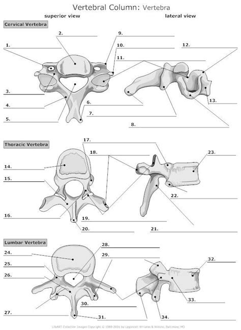 Anatomy Practice Worksheets | Anatomy bones, Human anatomy