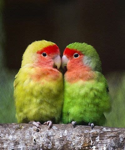 25 best ideas about birds on pretty birds pink animals and pink bird