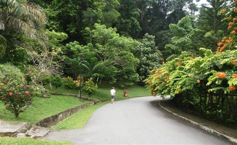 penang botanical garden penang botanic gardens