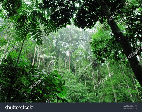 tropical green forest stock photo  shutterstock