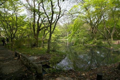 Kyoto Botanical Garden Scenic Garden Picture Of Kyoto Botanical Garden Kyoto Tripadvisor