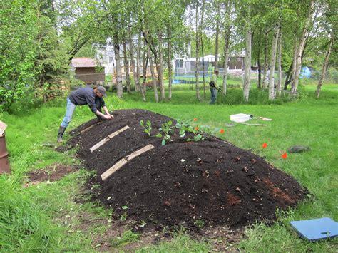 hugelkultur bed planting the hugelkultur the alaska urban hippie