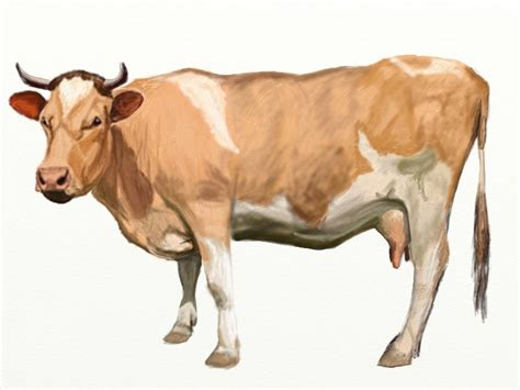 how to a cow how to draw a cow draw step by step