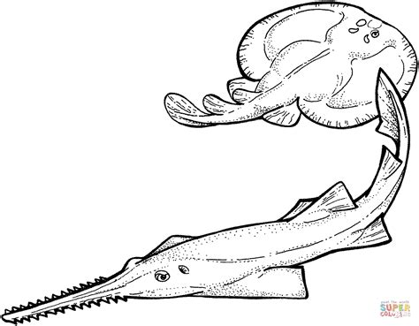 coloring pages sharks and rays sawfish and electric ray coloring online super coloring
