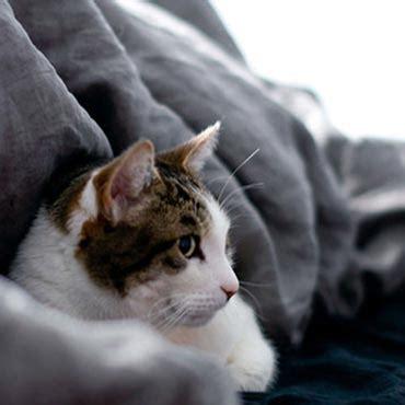 katze kotet in die wohnung dinge die jede wohnung mit katze haben sollte tierisch