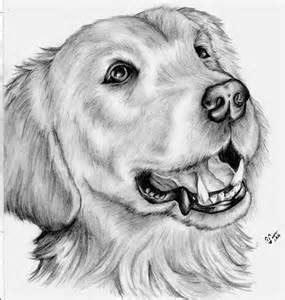 imagenes de animales para dibujar a lapiz mejores 9 im 225 genes de dibujo a lapiz en pinterest