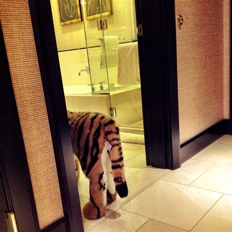 the hangover tiger in the bathroom nascar cup jimmie johnson hangover recreation racing news