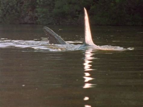mississippi river sharks dive into this carnivorous adventure when a