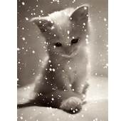 Animated Cute Cat Mobile Phone Wallpapers 240x320 Hd Cell