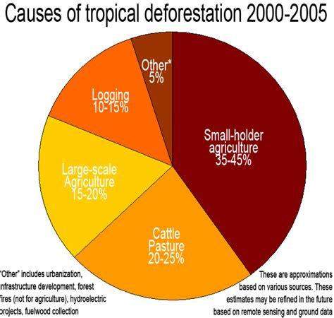 deforestation diagram the daintree rainforest