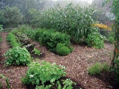 How To Start A No Till Garden From Scratch No Till Vegetable Garden