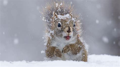 Tiere Im Winter Eichh Rnchen 4539 tiere im winter eichh 246 rnchen 4539 gt tiere im winter eichh