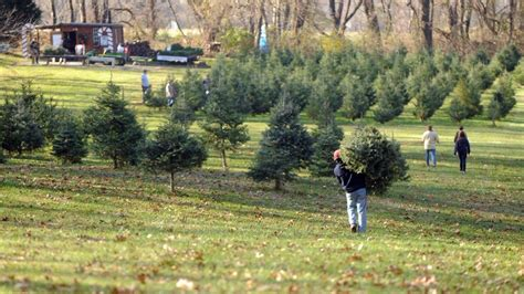 baltimore county sets new rules for christmas tree