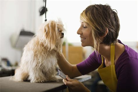 dog haircuts at home home grooming tips dogtime