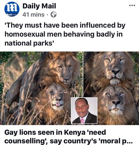 gay men apparently influence gay lions facepalm
